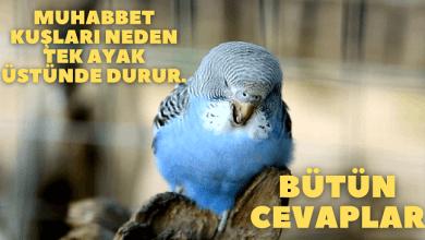 Muhabbet kuşları neden tek ayak üstünde durur