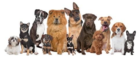 racas de cachorros