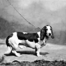 basset hound cachorro historia