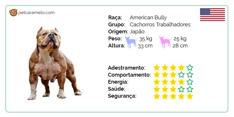 american bully cachorro