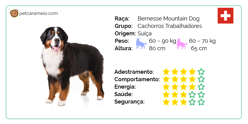 bernese mountain dog temperamento