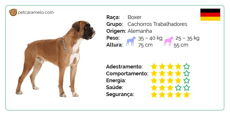boxer temperamento
