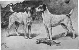 cachorro e historia do fox terrier escoces