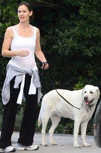 Atriz Jennifer Garner e seu labrador