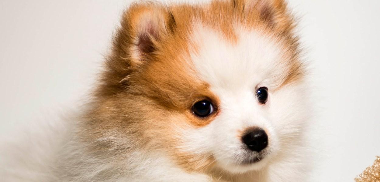 nomes para cachorro rico