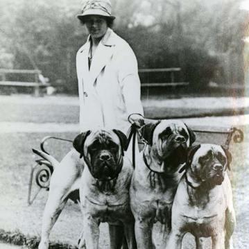 Mastiff ingles historia cachorro