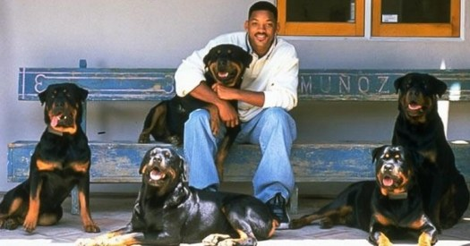 rottweiler will smith
