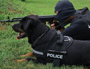 rottweiler policial