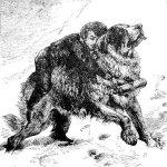 Cachorro bayo-sao-bernardo
