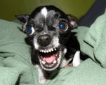 motivos para seu cachorro morder