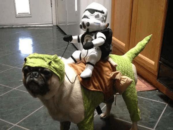 Pug-cachorro-fantasia