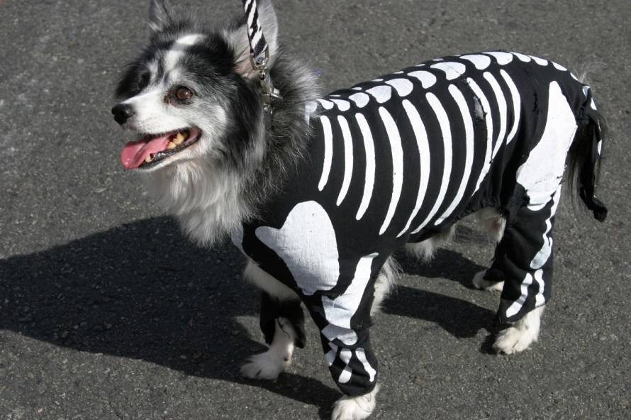 cachorro-fantasia-esqueleto