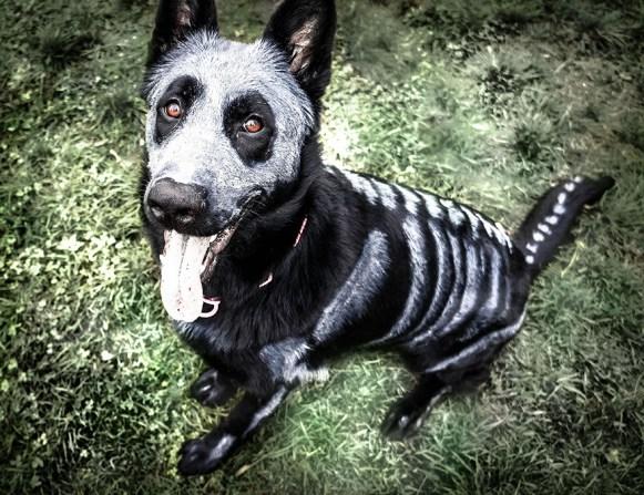 halloween para cachorros
