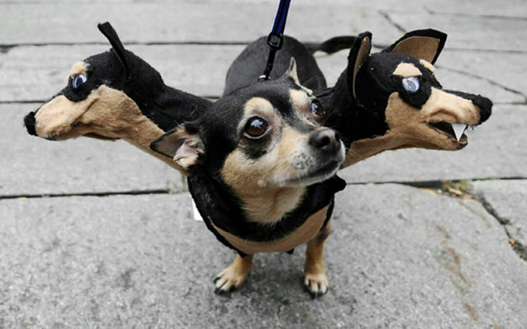 halloween fantasia cachorro pinscher