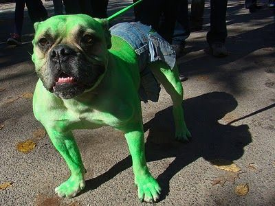 cachorro halloween fantasia