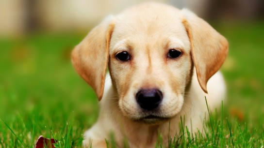 nomes para cachorro macho