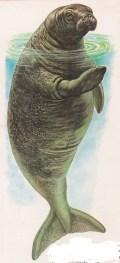 animais em extinção vaca marinha