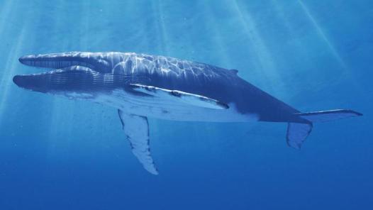 animais extintos no mundo baleia azul