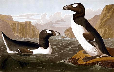 aves em extinção
