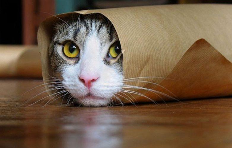 gatos machos engracados