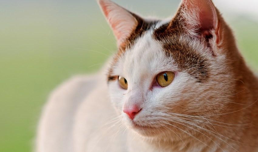 nomes de gatas