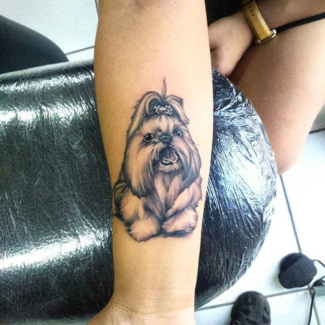 tatuagem-de-shih-tzu