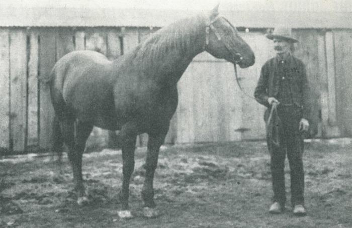 cavalo-quarto-de-milha-cavalo