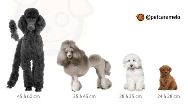tamanhos do cachorro poodle