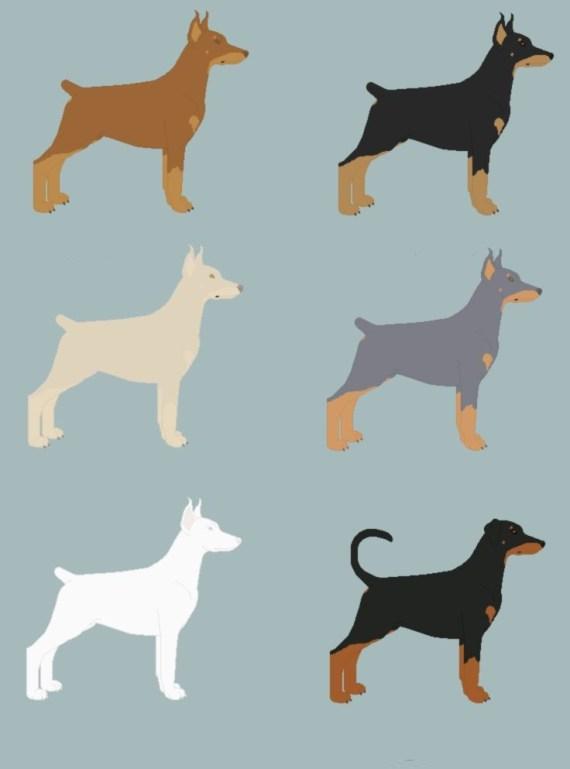 as cores do cachorro doberman