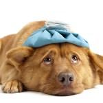 Remédio Caseiro para Verme em Cachorro