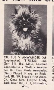 Affenpinscher cachorro jornal