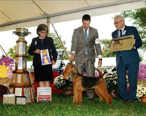 airedale terrier competicao