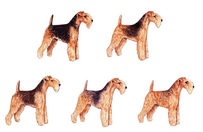 airedale terrier cores