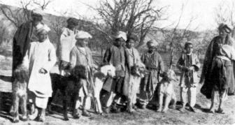 galgo afegão historia e origem
