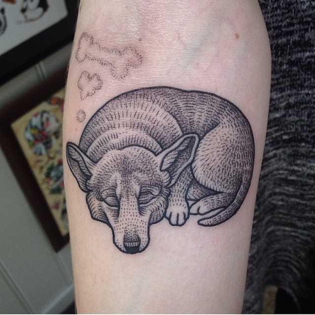 corgi tatuagem