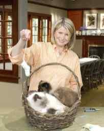 Gato Himalaio Martha Stewart