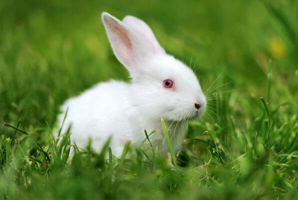 nomes para coelhos