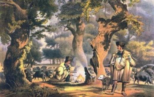 kuvasz historia e origem