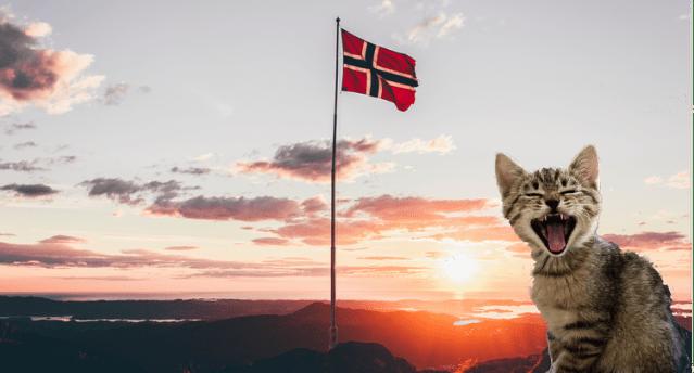 Gato Norueguês da Floresta oficial