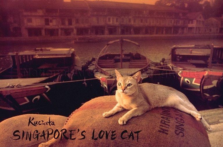 Gato Singapura poster rio