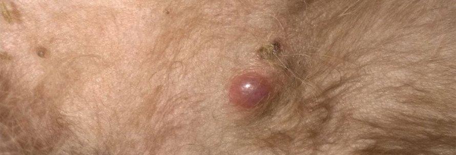bolhas de pus na pele do cachorro