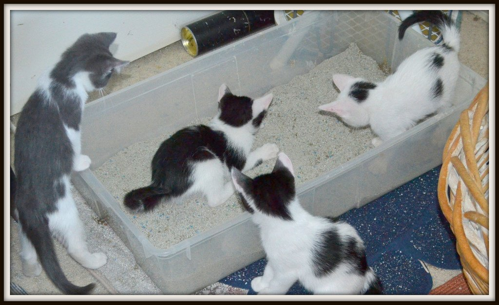 Kittens and litter box