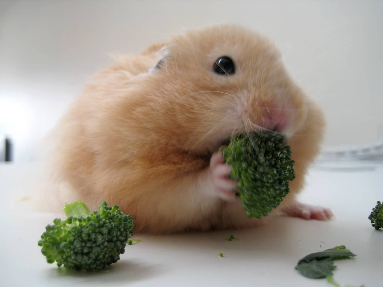 What Vegetables Can A Cat Eat