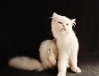 cat-3177585_1920
