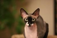 cat-4204883_1920