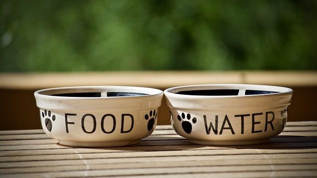 Best Slow Feed Dog Bowl Reviews: Better Habit & Health