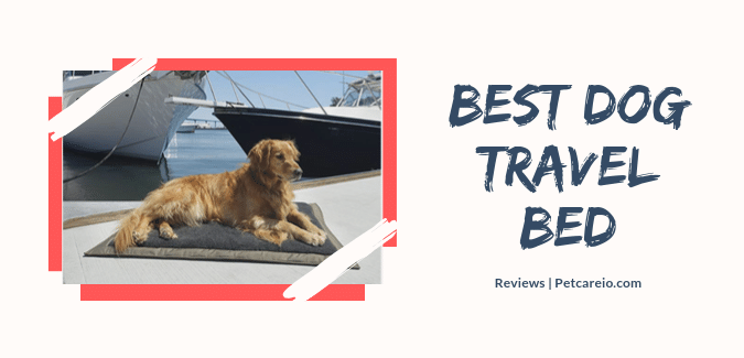 Best Dog Travel Bed Reviews- Tension Free Travel!