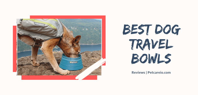 Best Dog Travel Bowls:Collapsible, Portable, Waterproof