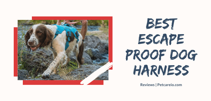Best Escape Proof Dog Harness Reviews