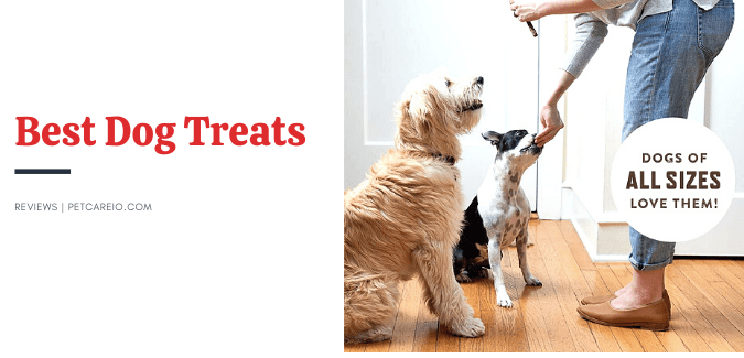 Best Dog Treats [Reviews & Guideline from Dog Trainers]